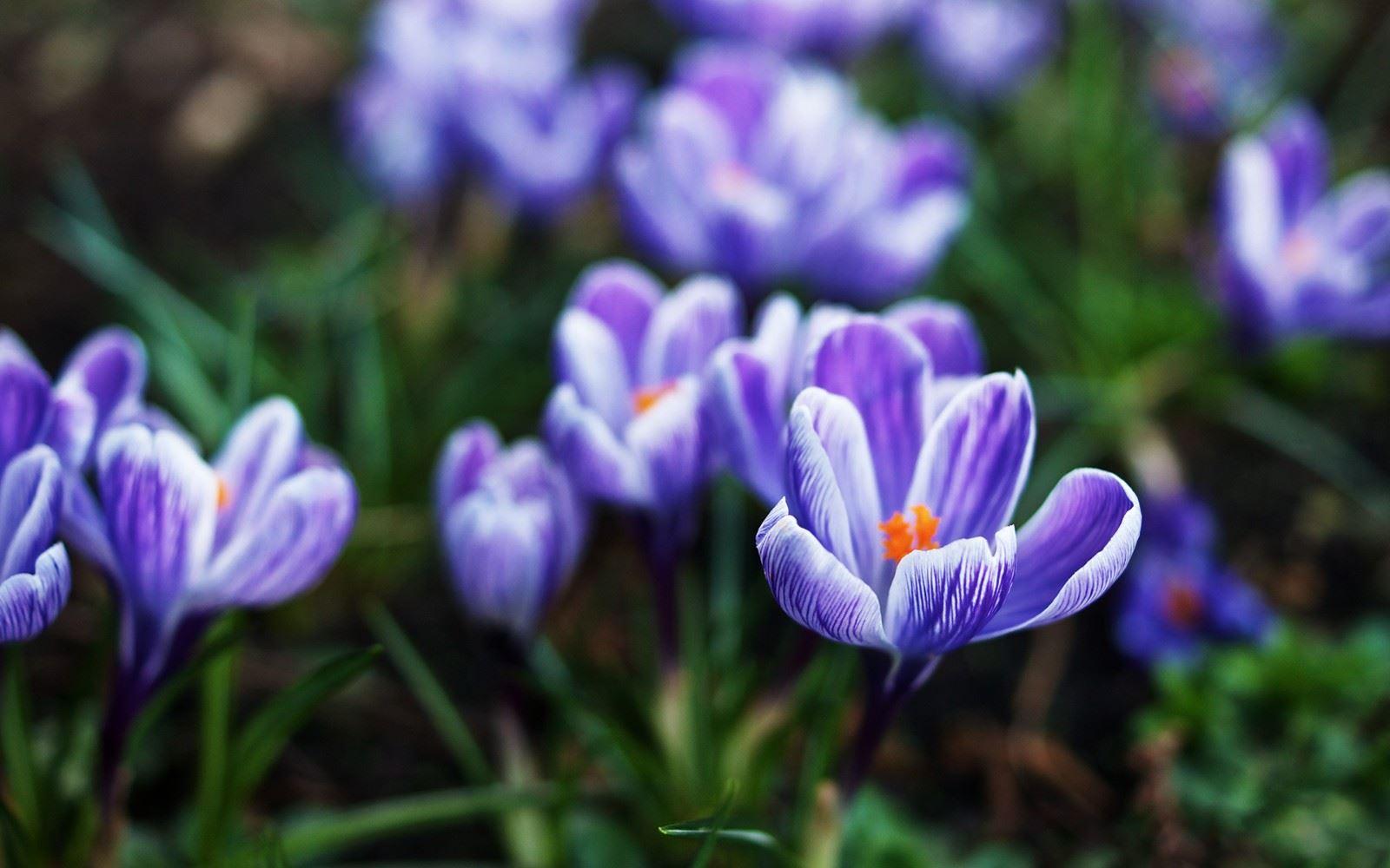 一簇簇迎春花缤纷