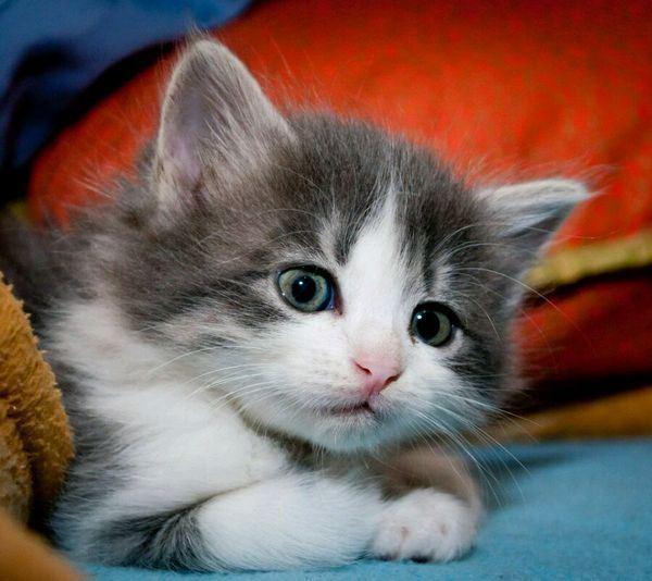 猫咪可爱瞬间唯美萌萌的