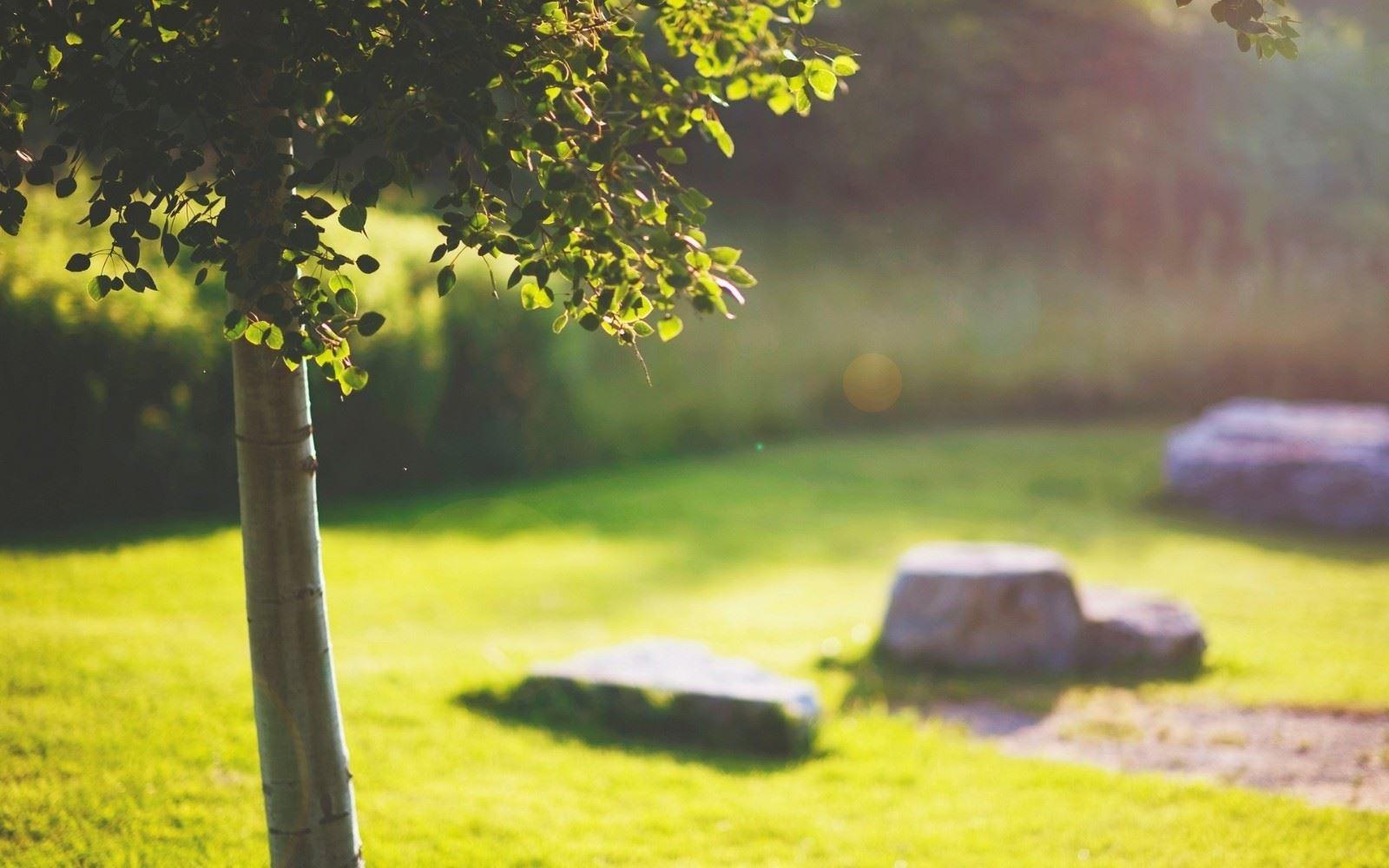 清澈的阳光草上温暖人心