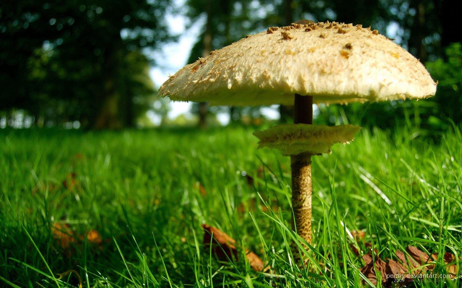 清新的小草地美丽的蘑菇