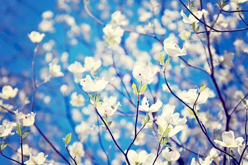 唯美花卉精选高清不同品