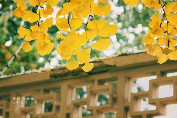 非主流伤感秋天落叶时间