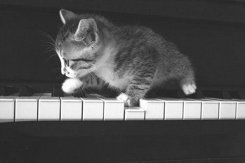 超级可爱小猫咪黑白大图图片
