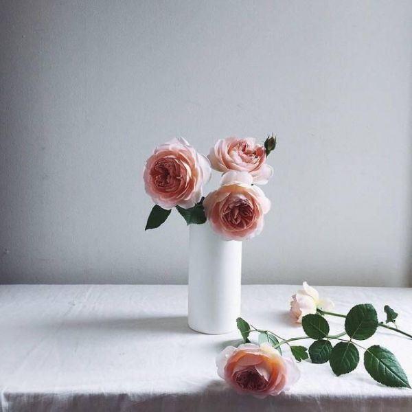 玫瑰花简约风高级感小清