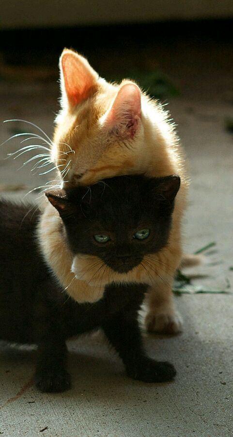 萌宠幼猫可爱瞬间合辑图