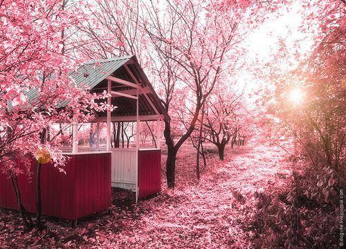 花花世界高清唯美大全图片