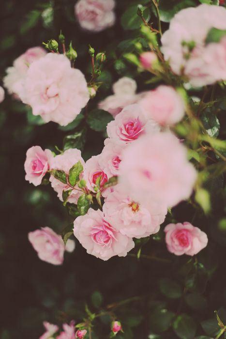 小清新题材摄影之花卉图片