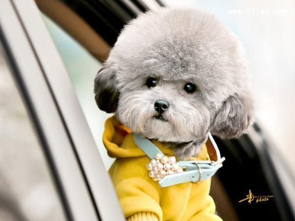 可爱狗狗萌宠大全图片