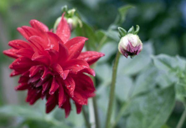 色彩鲜艳花卉高清唯美植