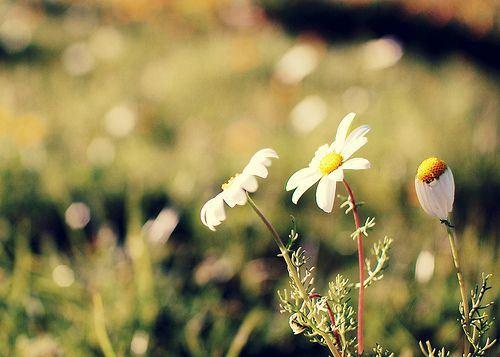 精选唯美意境植物