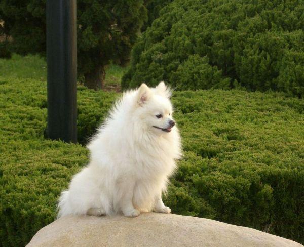宠物狗的爱高清大全图片