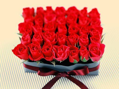 唯美意境玫瑰花大