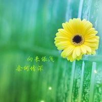 唯美花朵花卉植物微信头