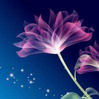花朵唯美意境头像大全_微信头像大全图片