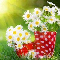 阳光下的花花草草淡雅微