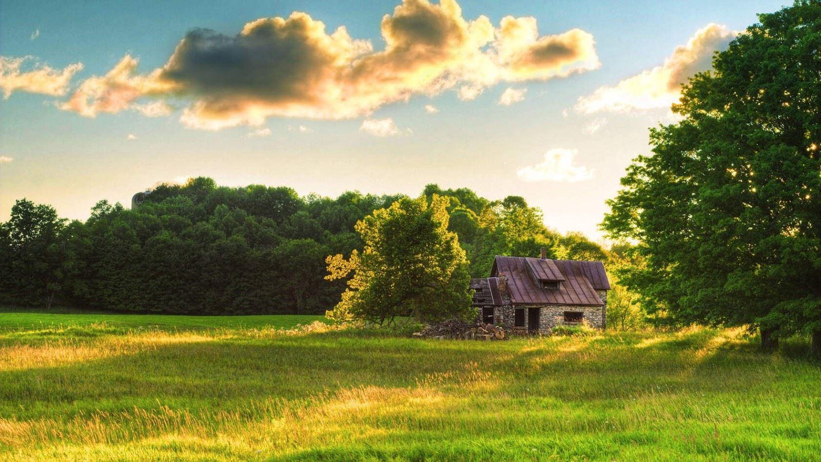 小树林一角小木屋唯美森
