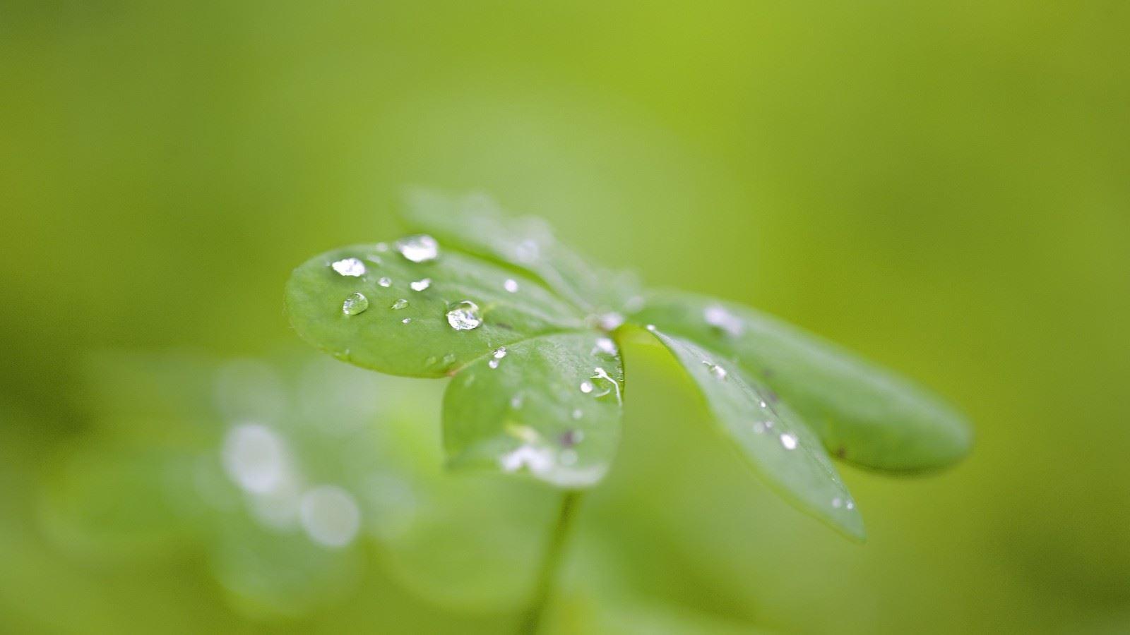 叶子露水小清新治愈护眼