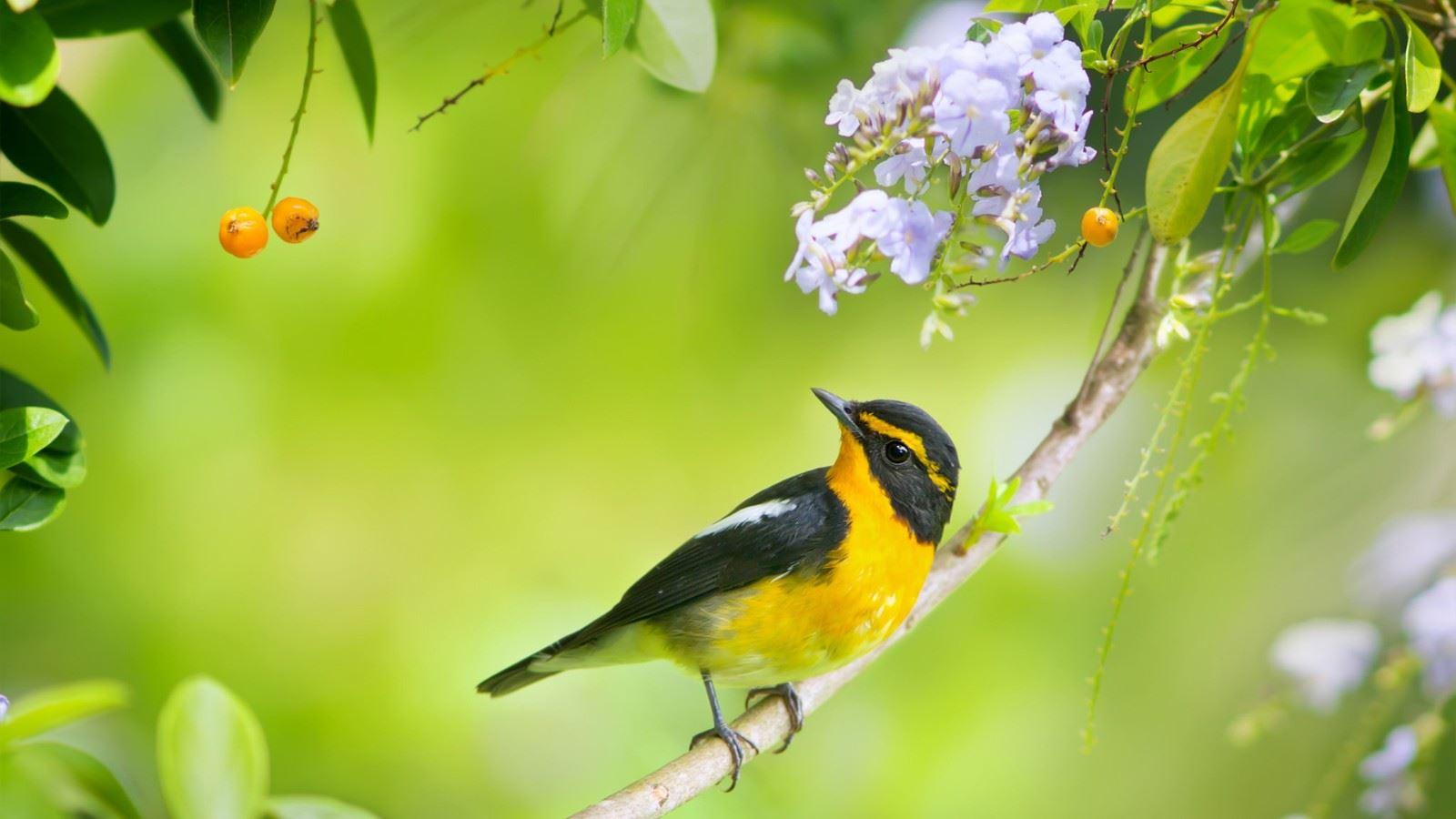 大自然一角小鸟停留唯美